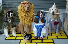 Safety Tips for Pets Wearing Halloween Costumes - New Mexican Kennels - Albuquerque, NM Cute Dog Costumes, Pet Halloween Costumes, Animal Costumes, Dog Halloween, Happy Halloween, Dogs In Costumes, Dog Lion Costume, Awesome Costumes, Halloween Chocolate