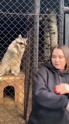Cute Wild Animals, Cute Little Animals, Cute Funny Animals, Animals Beautiful, Animals And Pets, Cute Cats, Funny Animal Jokes, Funny Animal Videos, Funny Animal Pictures