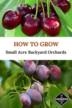 Acre Backyard Orchards Grow your own fruit in a small backyard orchard. Learn how to set up a small orchard and grow apples, sweet cherries, pears, peaches, and plums.Grow your own fruit in a small backyard orchard. Learn how to set up a small orchard and Home Vegetable Garden, Fruit Garden, Garden Trees, Veggie Gardens, Farm Gardens, Flowers Garden, Growing Fruit Trees, Small Fruit Trees, Magic Garden