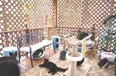 cat room with lattice