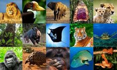 I'm traveling to Switzerland right now to participate in the @cites Standing Committee meeting! The agenda is enormous and includes issues including the conservation of pangolins tigers rosewood enforcement issues surrounding biosynthetic rhinoceros horn the illegal trade in hornbill beaks and many more!  The full list of topics can be found on the CITES website at: http://ift.tt/2AyBaC7 (image here via @cites ). . . #wildlife #conservation #animals #traveling #switzerland #nature…