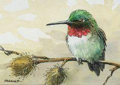 Ruby Throated Hummingbird, ACEO Original Watercolor, bird autumn Wildlife Nature