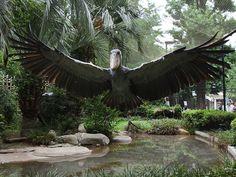 Shoebill wingspan