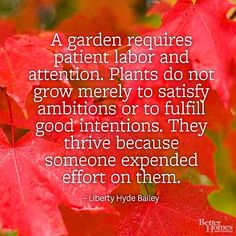 """A garden requires patient labor and attention. Plants do not grow merely to satisfy ambitions or to fulfill good intentions. They thrive because someone expended effort on them."" -Liberty Hyde Bailey"