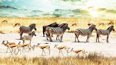 animales sabana - Cerca amb Google