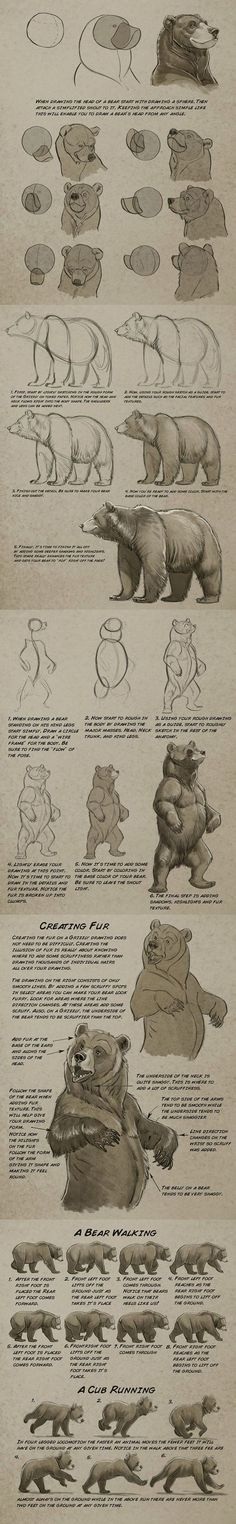 Animal Drawings grizzly bear drawing tutorial by Aaron Blaise - Drawing Techniques, Drawing Tips, Drawing Reference, Drawing Sketches, Sketching, Learn Drawing, Manga Drawing, Drawing Ideas, Animal Sketches