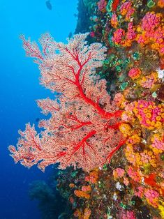 Thriving Life Under the SeaYou can find Ocean life and more on our website.Thriving Life Under the Sea Sea Photography, Underwater Photography, Marine Photography, People Photography, Life Under The Sea, Under The Ocean, Beautiful Sea Creatures, Sea Plants, Beneath The Sea
