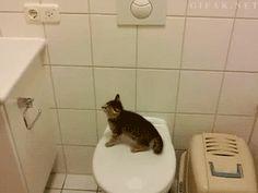 Katzensprung  So close - Fail Gif   Webfail - Fail Bilder und Fail Videos