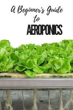 What is Aeroponics? Simply put, it's the spraying of a nutrient solution directly onto a plants roots. Why not check out our awesome beginners guide and give it a try yourself?