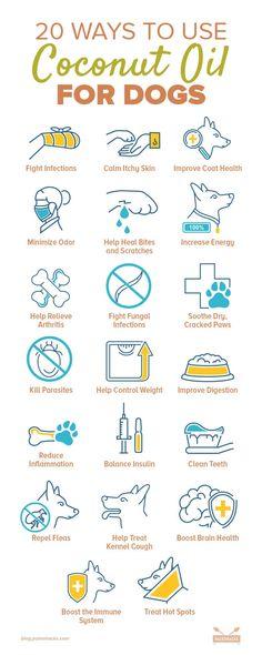 Coconut Oil For Dogs, Coconut Oil Uses, Border Terrier, Beanie Boos, Amor Animal, Oils For Dogs, Dog Care Tips, Pet Care, Homemade Dog Treats