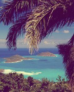 #beach #ocean #sea #water #blue #turquoise #summer #landscape #scenery #nature #palm tree
