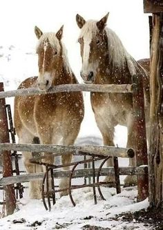 Would love to be able to walk out to feed such delightful creatures as these and give them peppermints.  <3
