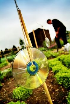 Use old CDs to scare away birds in a berry garden. Birds are naturally frightened by shiny, moving objects. Too bad this couldn't work for other nuisances as well. Lawn And Garden, Garden Art, Garden Birds, Outdoor Projects, Garden Projects, Farm Gardens, Outdoor Gardens, Popsugar, Garden Pests