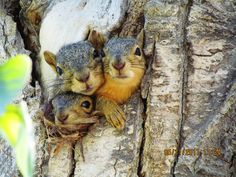 Idaho's Squirrel Resort...join us for a roomy relaxing night at Squirrel Lodge!