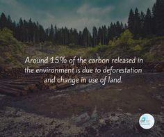 If we stop deforestation, it'll give us more time to prepare other factors for climate change.