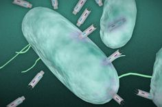 Researchers develop a new means of killing harmful bacteria - http://scienceblog.com/79027/researchers-develop-means-killing-harmful-bacteria/