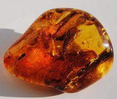 образцы месторождений янтаря: 2 тыс изображений найдено в Яндекс.Картинках
