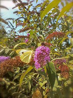 Twitter / MarNiembro: @NHM_London Butterfly in Wingene ...