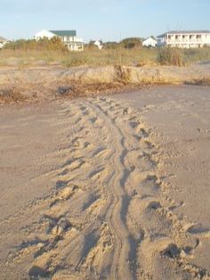 Turtle Tracks on Tybee Island, Georgia.  Go to www.YourTravelVideos.com or just click on photo for home videos and much more on sites like this.