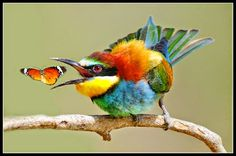 que de couleurs pour un bel oiseau