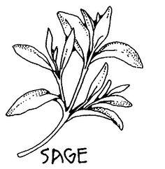 Sage+-+Salvia+Officinalis+Tincture+Wild+Harvested+4+Oz