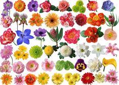 80-species-of-flowers-roses-and-chrysanthemum-psd0.jpg (600×429)