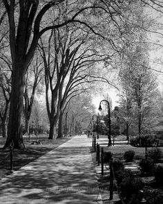 Penn State Photography Timeless  8x10 Inch by ara133photography, $25.00