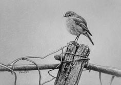 Bird (drawing on paper)