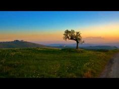 ▶ Ennio Morricone - La califfa - YouTube