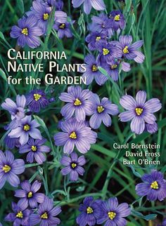 California Native Plants for the Garden . Available at the Huntington Store.  http://www.thehuntingtonstore.org/collections/books/products/california-native-plants-for-the-garden