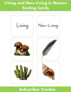 Living/ Non-Living in Nature | Montessori Nature subscriber freebie. Visit my page and join our list, download this printable and receive updates!