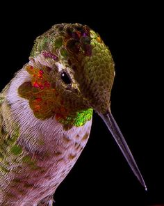 My Favorite Hummer close-up Pic to date...