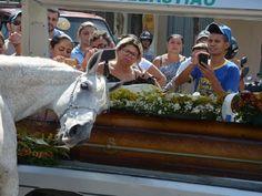 Este #caballo conmueve a todos al aparecer en el #funeral de… http://www.cubanos.guru/este-caballo-conmueve-todos-al-aparecer-funeral-dueno/