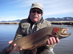 Massive rainbow trout from the South Platte in CO