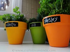 Chalkboard paint labeled potted plants