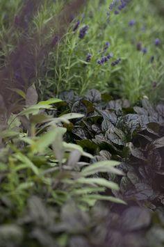 revsuga. en blåskimrande rabatt med silvriga inslag. Läget är direkt i söder