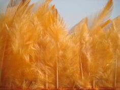 feathers for craft!