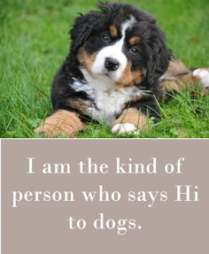 I'm the kind of person who says Hi to dogs. A collection of 42 dog sayings which express the way we all feel about our dogs Pug Quotes, Animal Quotes, Animal Signs, Life Quotes, What Kind Of Dog, What Is Like, All Dogs, Best Dogs, Animal Magazines