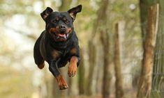 Hunde fotografieren: 8 Tipps von Fotografin Kathrin Köntopp - PC Magazin