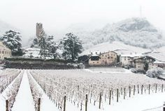 A #Lagrein vineyard beyond your winery