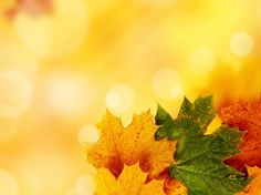 Yellow Autumn PPT Backgrounds
