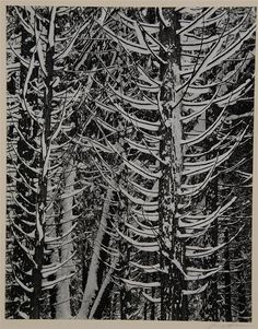 ANSEL ADAMS, (American, 1902-1984), WINTER FOREST DETAIL, gelatin silver print;, 9 1/2 x 7 3/8 inches