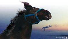 『祭の馬』松林要樹監督