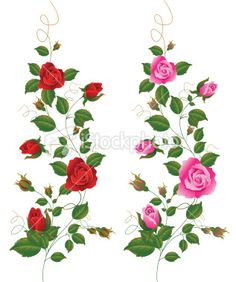 Red and Pink Rose Vine