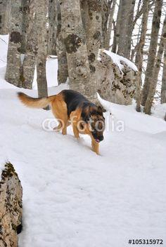 Cane nel bosco innevato