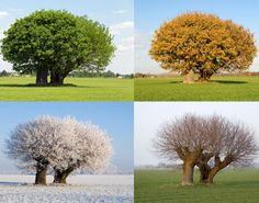 Sweet Magnolias Farm.    We all go through seasons in our lives ...in many ways ...emotionally, physically, spiritually.