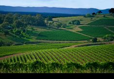 Hunter Valley, NSW Vineyards / A beautiful region, not far from Sydney, and beaches etc. / Great food, wines and people.
