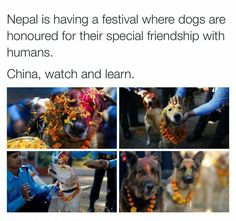 Take the hint China and all the other Asian countries who torture and eat dogs.  We celebrate them, being man's best friend!!!!