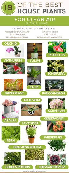 We look into the 18 best indoor house plants to help purify the air and detox your home. Apartment