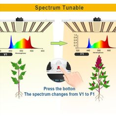 Maximum Uniformity:MB3 Pro is an upgraded version of the MB series. Unique designed 8-LED bars provide more even canopy coverage, especially to the outer edges cultivation areas. With 2880 pcs SAMSUNG LM301B diodes+80 Osram 660nm; Upgraded 2 spectrum :MB3 Pro Led grow lights V1 spectrum:700W / F1 spectrum:760W ;Draw 700W-760 watts with 1960-2128μmol/s, achieving an impressive PPE of 2.6~2.8 μmol/J, coverage for 5'x5′ of high-yielding full-cycle growth. Screen Timer, Led Grow Lights, Indoor Plants, Spectrum, Inside Plants